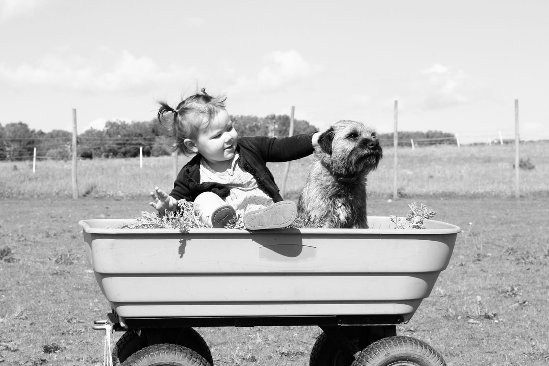 dog and child in a wagon looking out together